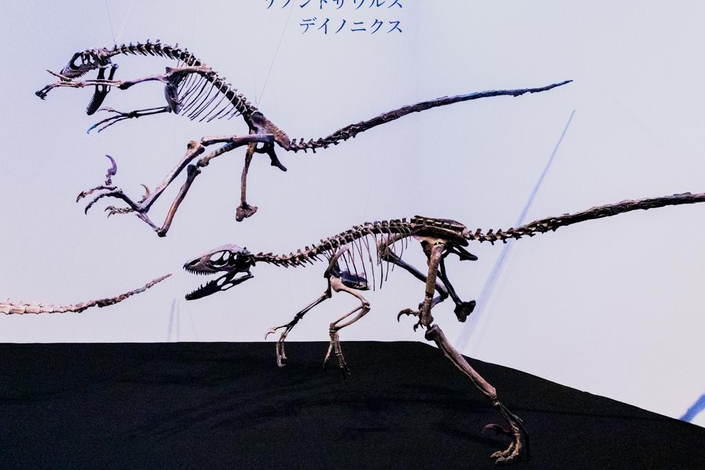国立科学博物館 特別展『恐竜博 2019』
