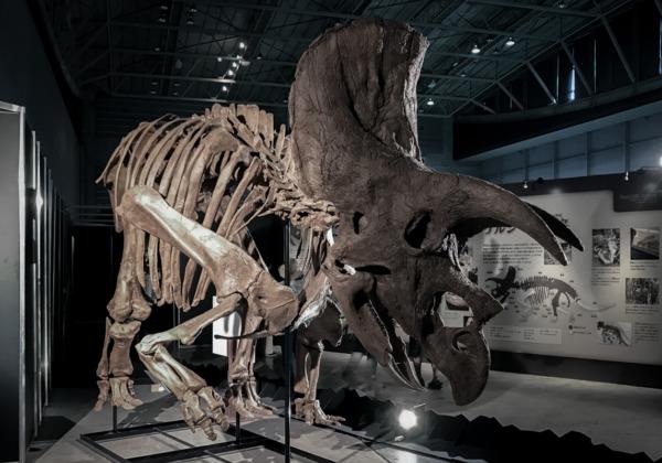 恐竜展『ヨコハマ恐竜展2020〜五大陸の恐竜、上陸!〜』