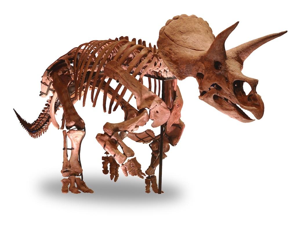 DinoScience 恐竜科学博~ララミディア大陸の恐竜物語~